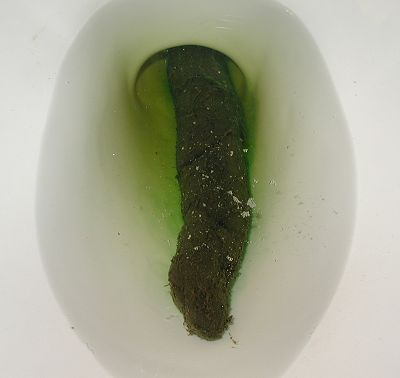 Remarkable Giant poop in toilet apologise, that
